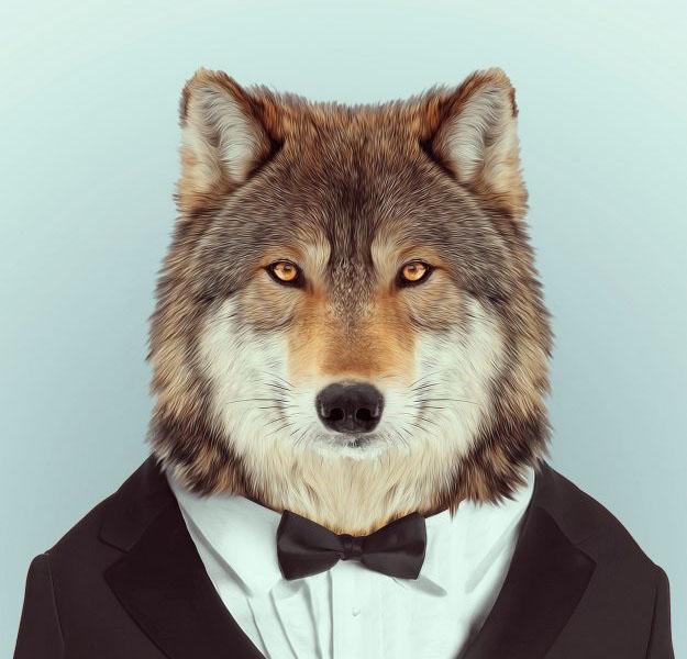 Аватарки для Ватсапа для мужчин - животные.