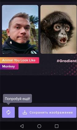 Определение животного в Gradient